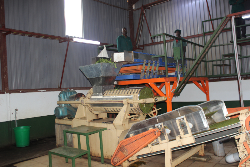 Other Tea Processing Plants