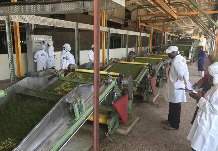Verification photo of CTC line at Kayonza Growers Tea Factory